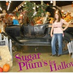 Sugar Plum's For Halloween