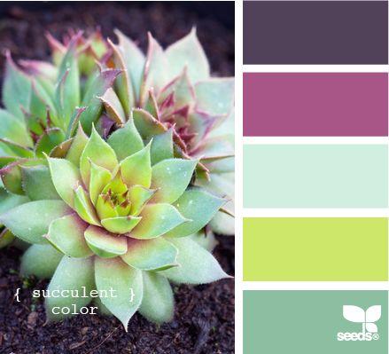 Succulent Colors Color Schemes - Life With Lorelai