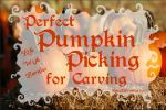 Perfect Pumpkin Picking For Carving - lifewithlorelai.com