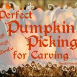Perfect Pumpkin Picking For Carving