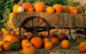 Pumpkin Patch and Hay Wagon - Perfect Pumpkin - lifewithlorelai.com