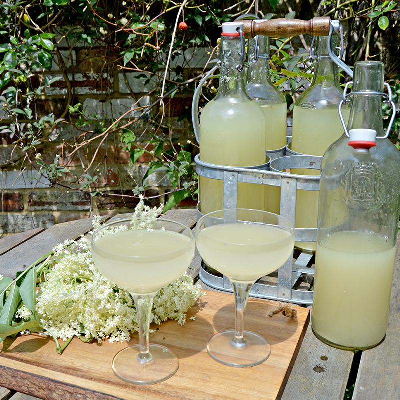 Homemade Elderflower Champagne - HMLP 44 Feature