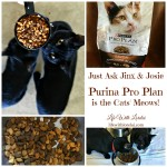 Purina Pro Plan Is The Cats' Meows!