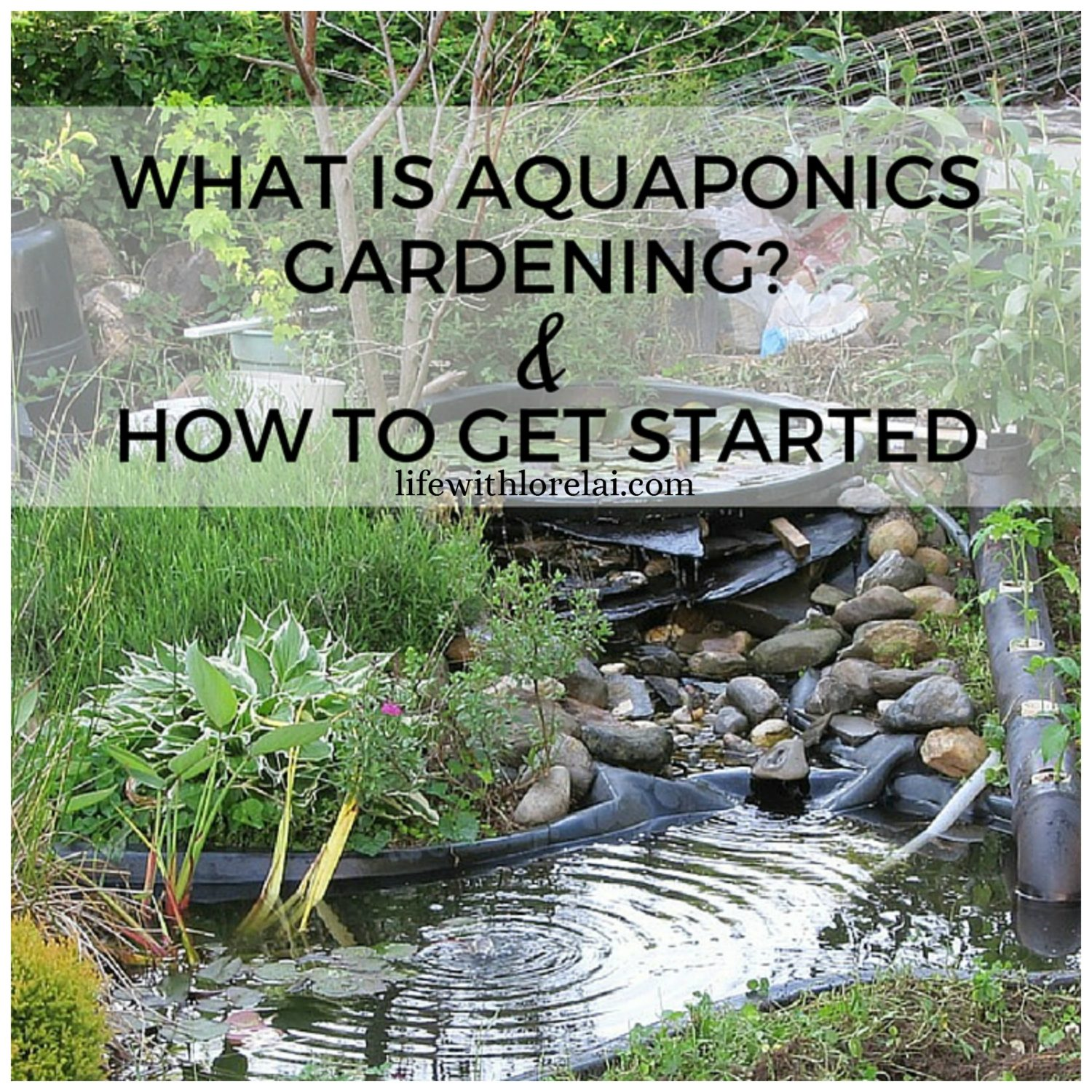Aquaponic Gardening Create A Self Sustaining Garden Life With