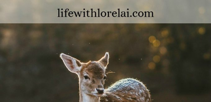 Humane-Ways-Keep-Animals-Out-Yard-Life With Lorelai-Title