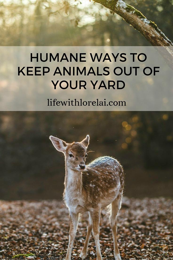 Humane-Ways-Keep-Animals-Out-Yard-Life With Lorelai