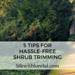 Shrubs – 5 Hassle-Free Trimming Tips