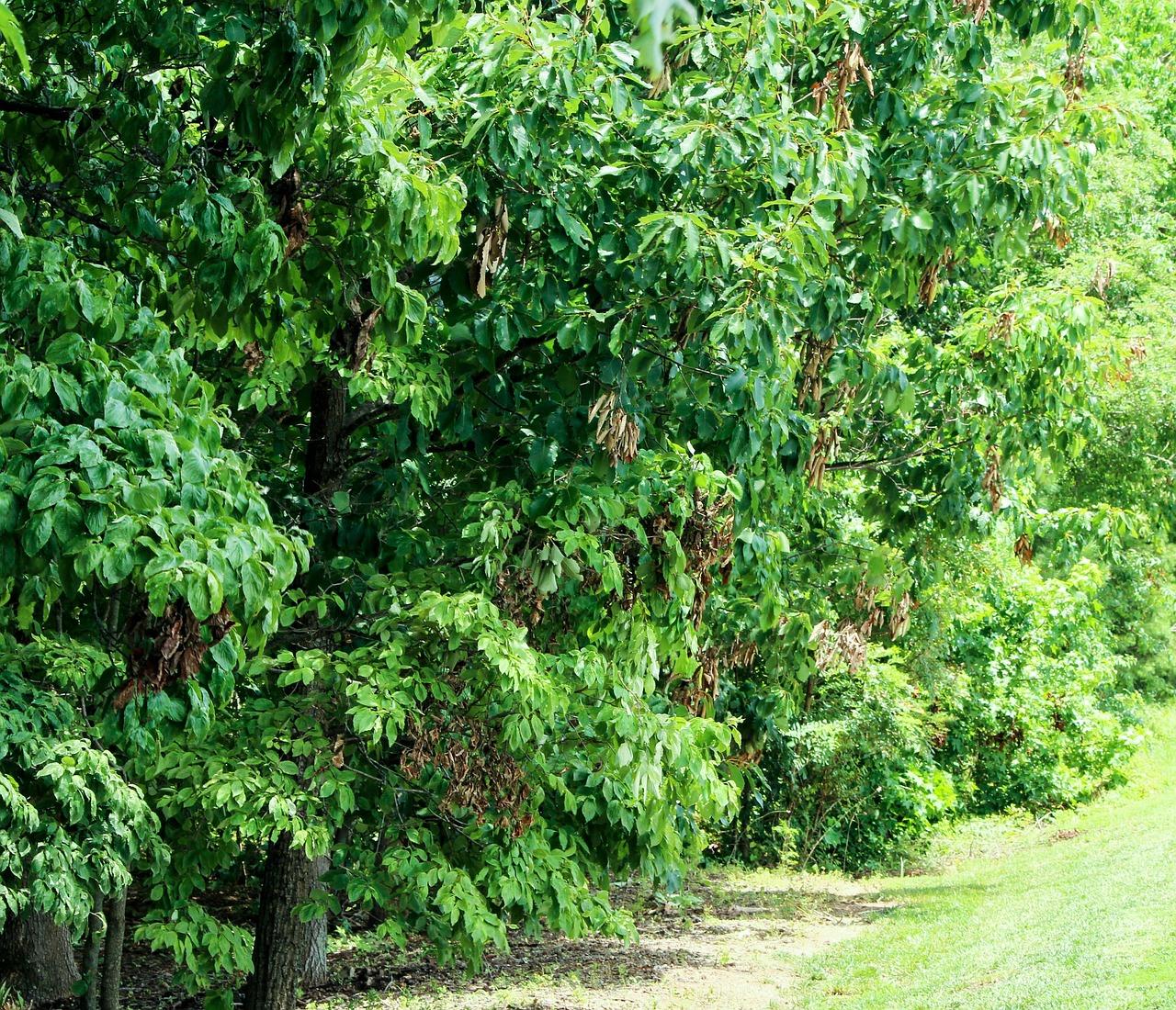 Trimming Shrubs - trees-143302_1280