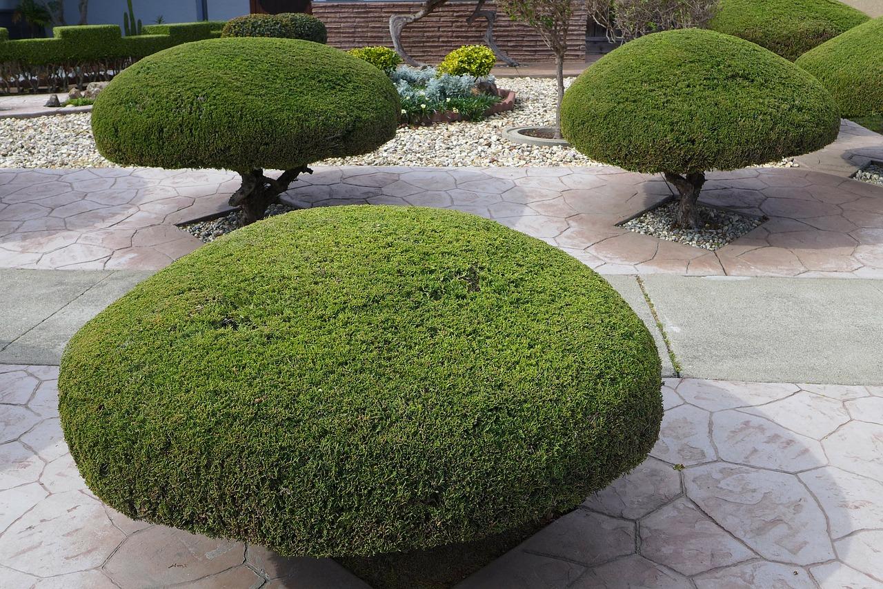 Trimming Shrubs - trees-92222_1280