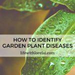 How To Identify Garden Plant Diseases