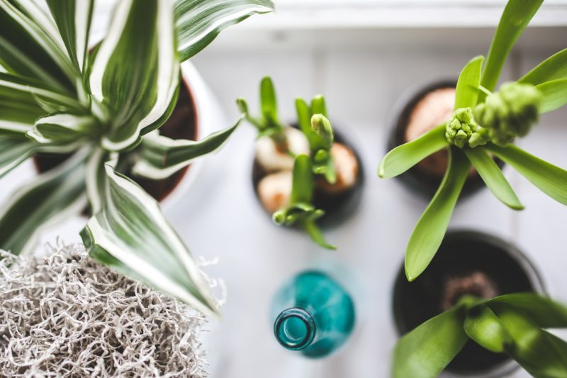 How-To Create A Terrarium For Your Home - This is an easy DIY project for those who enjoy indoor plants. #Terrarium #Plants #Gardening #DIY #Garden #Home
