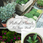 Potted Plants Keep Your Deck Colorful And Festive