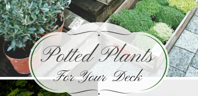 Keep gardening through the autumn and winter months with potted plants. get ideas for colorful and festive ways to make your deck a garden to enjoy.