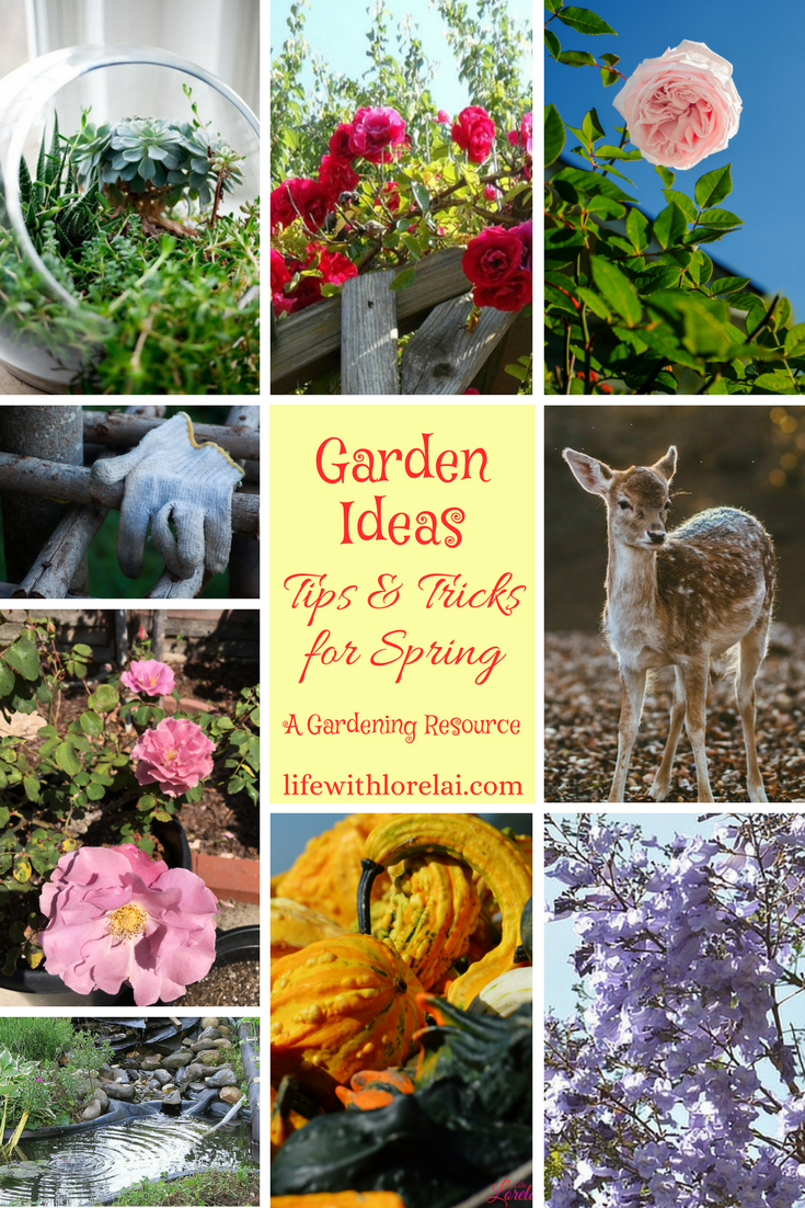 Gardening is a fun and productive way to de-stress. Discover wonderful garden ideas and tips to plant, maintain, decorate, and beautify your gardens.