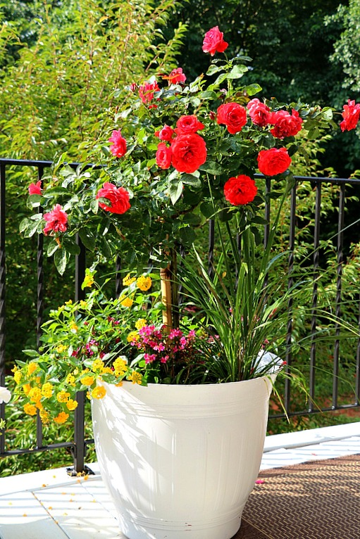 A collection of 10 beautiful container garden ideas that you're sure to love! Popular planters for versatility, space, lovely to make any setting a garden!