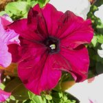 Snazzy Snapshots – In The Garden