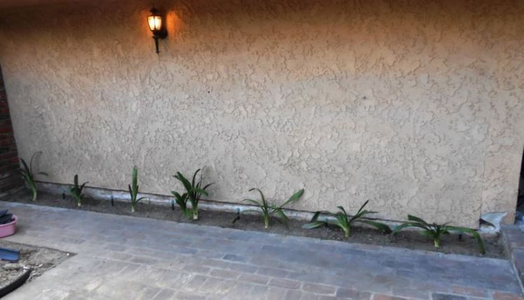 Clivia planted along walkway - Life With Lorelai