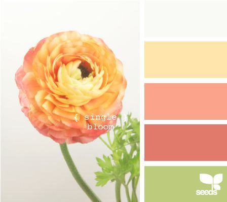 Single Bloom Color Schemes - Life With Lorelai