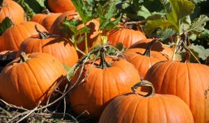 Perfect Pumpkins - lifewithlorelai.com