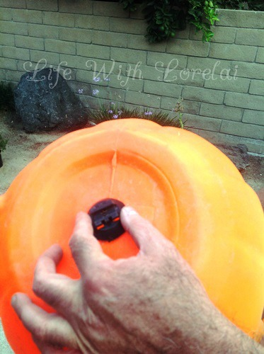 size the base to the pumpkin - Life With Lorelai