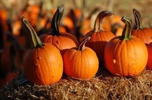 small pumpkins - Life With Lorelainkdtcrmall pumpkins - Life With Lorelai