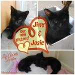 Kittens – Hijinx & Josette