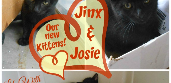 Jinx & Josie - Our New Kittens - Life With Lorelai