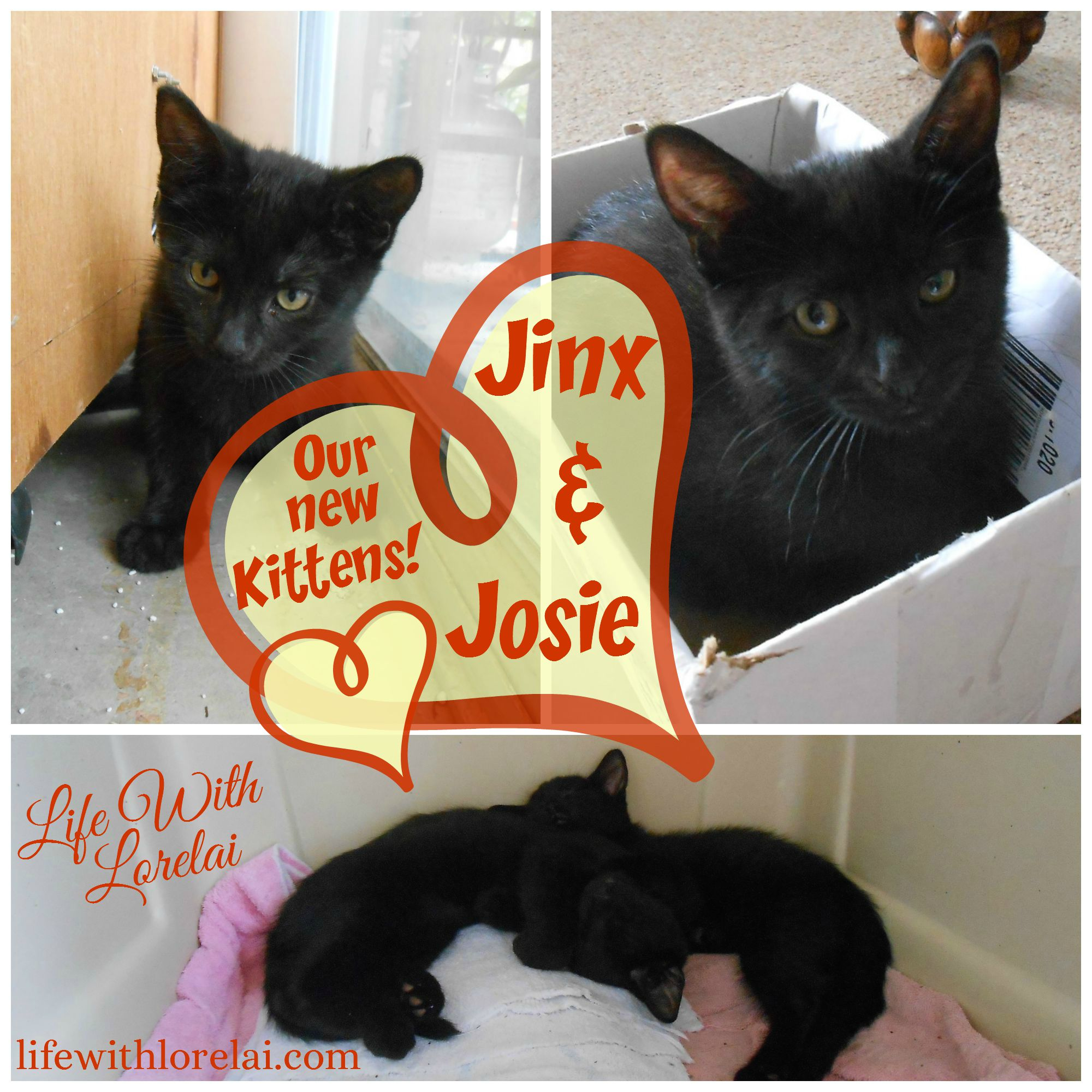 Jinx & Josie - Our New Kittens - Life With Lorelai