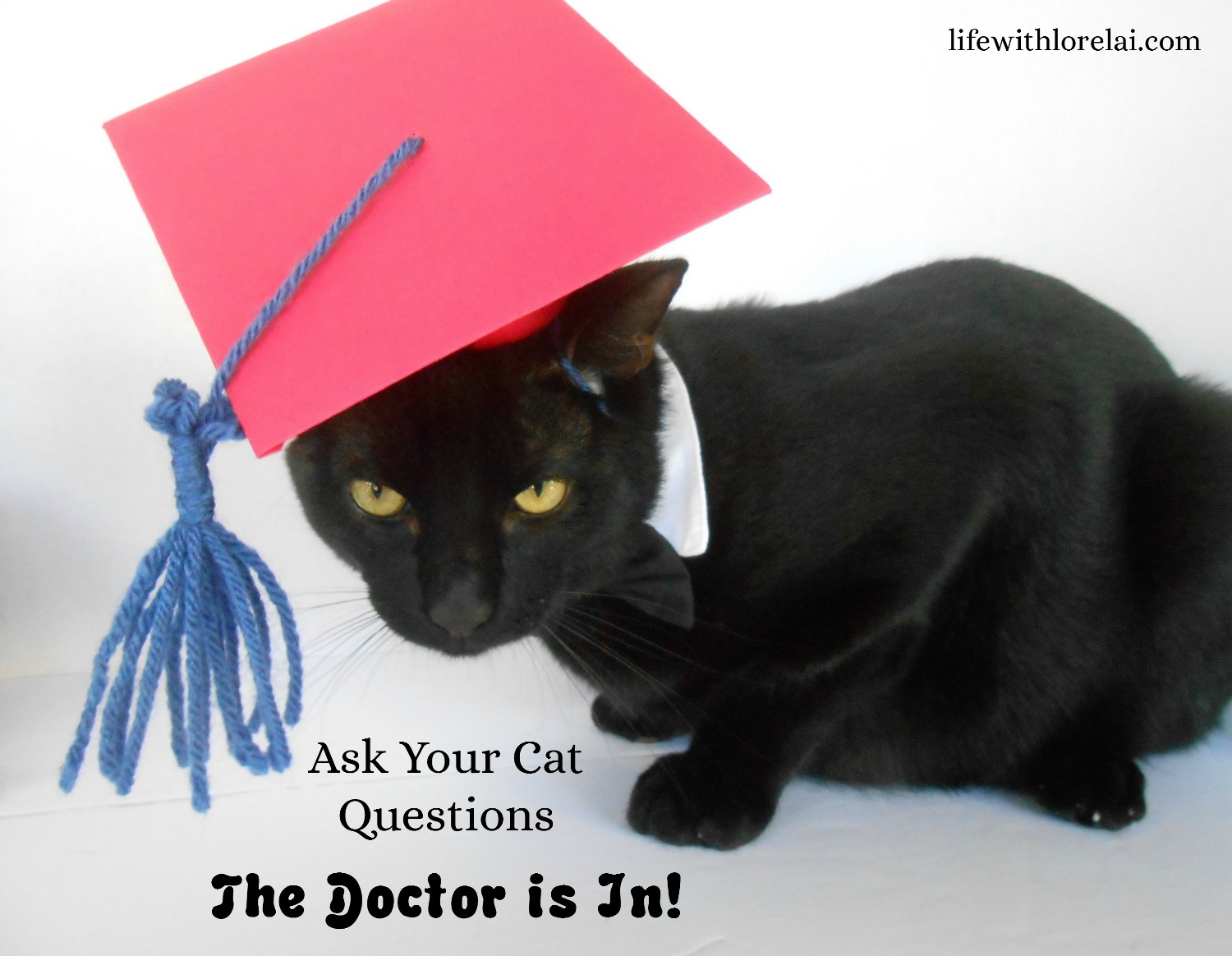 Ask-Cat-Questions-Doctor-Is-In-Fresh-Step-Total-Control-Power-Febreze