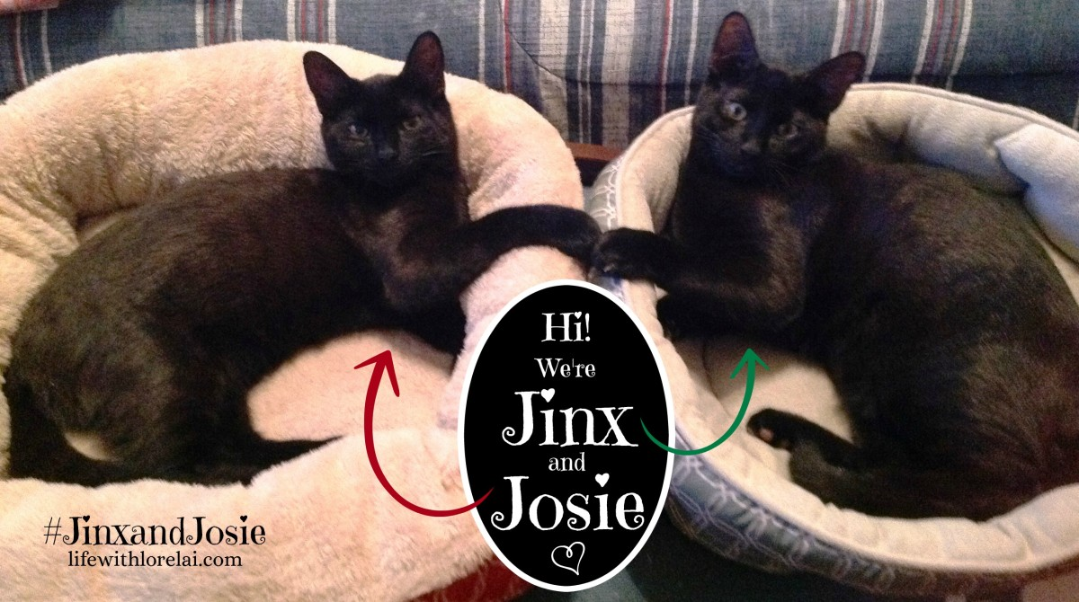 Hi We're Jinx and Josie - #JinxandJosie - lifewith lorelai