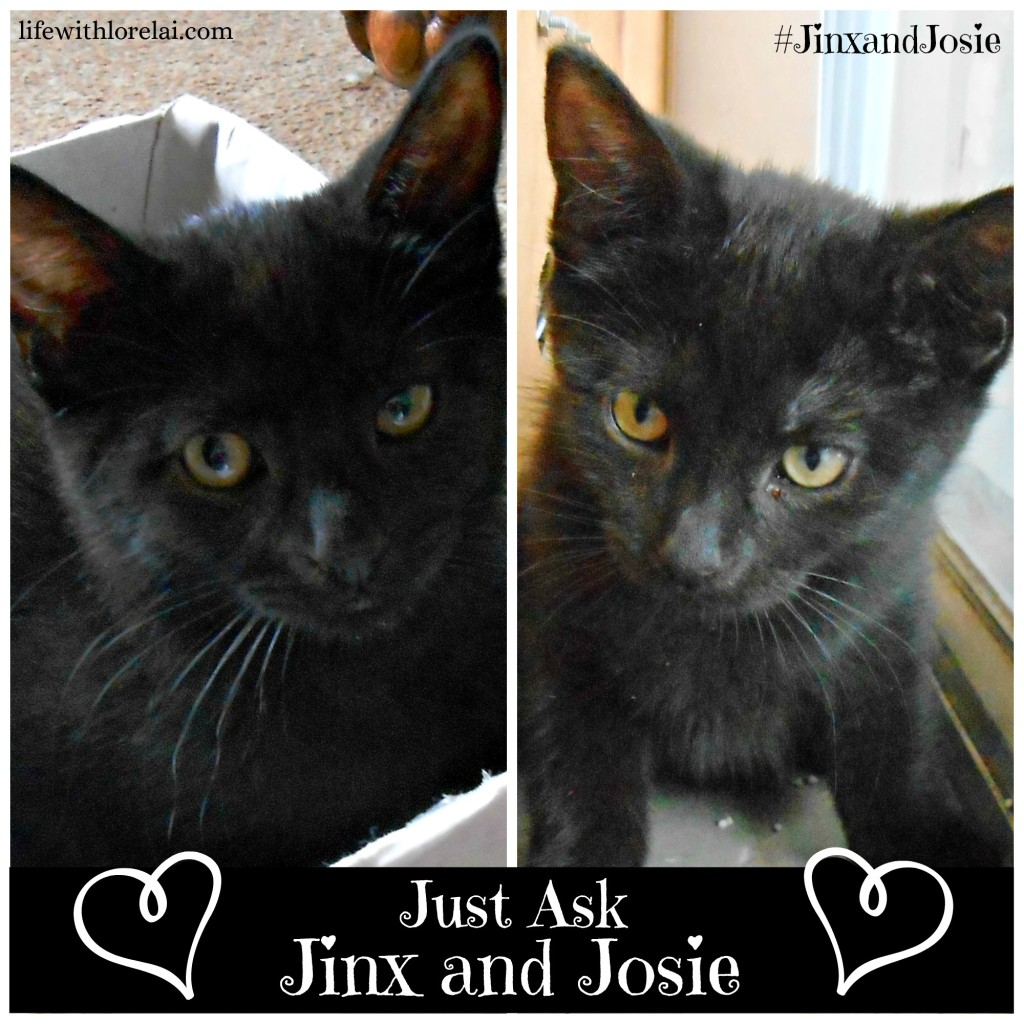 Just Ask Jinx and Josie - #JinxandJosie - lifewithlorelai