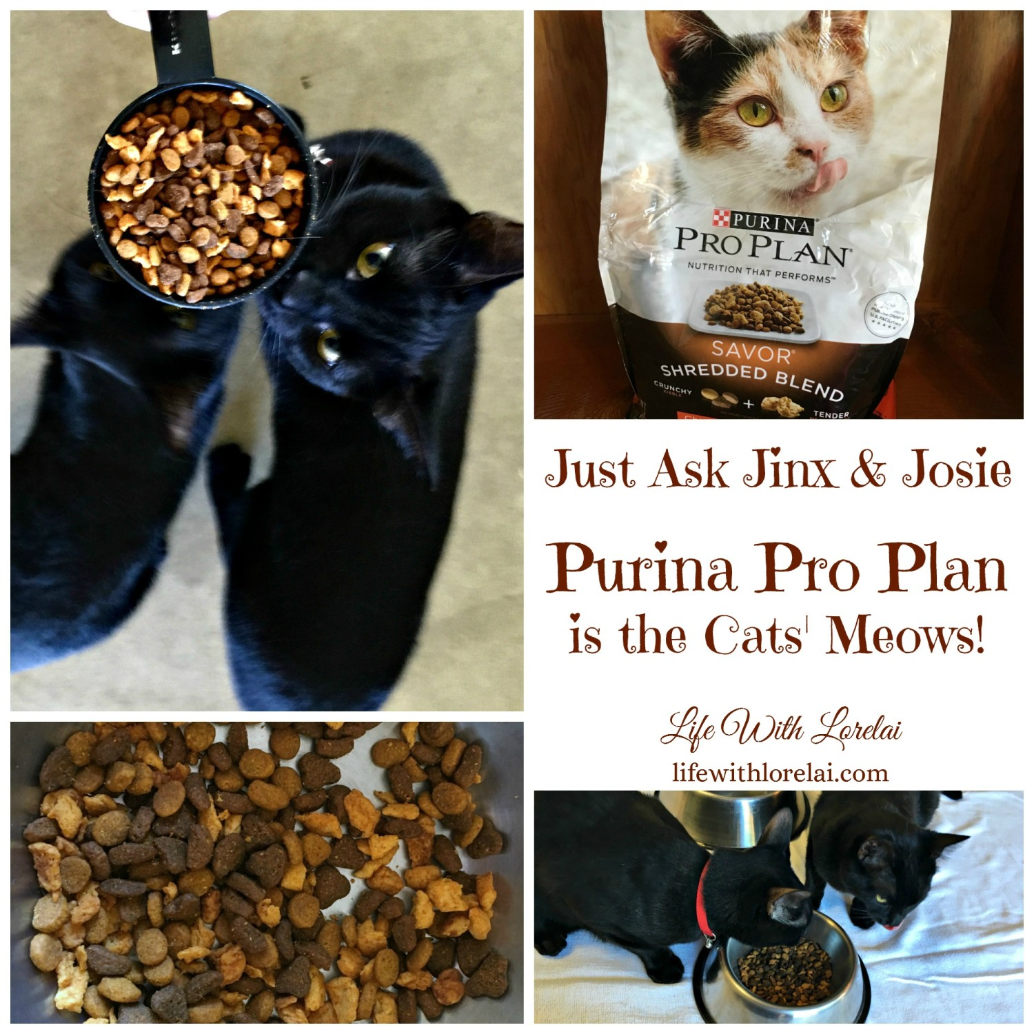 Purina Pro Plan Is The Cats' Meows - Life With Lorelai - #SavorCatReaction