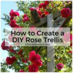 How To Create A DIY Rose Trellis