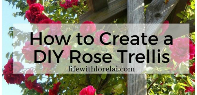 Roses come in many shapes, sizes, and colors. Add a gorgeous DIY Rose Trellis as a focal point in your garden with a stunning climbing rose.