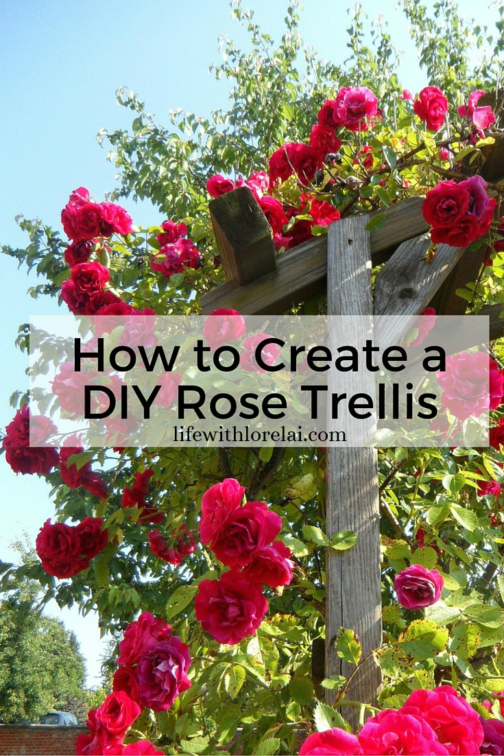 How to Create a DIY Rose Trellis - Life With Lorelai