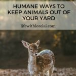 Humane Ways To Keep Animals Out Of Your Yard