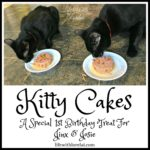 Kitty Cakes – A Birthday Treat For Jinx And Josie