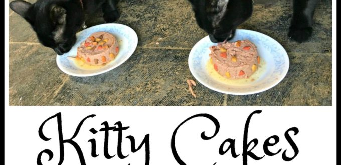 Kitty Cakes - Special 1st Birthday Treat - Jinx and Josie