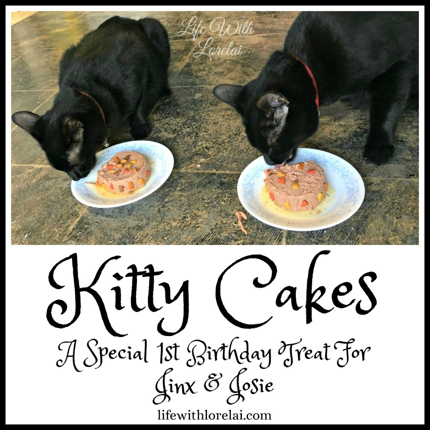 Brilliant Kitty Cakes A Birthday Treat For Jinx And Josie Life With Lorelai Personalised Birthday Cards Arneslily Jamesorg