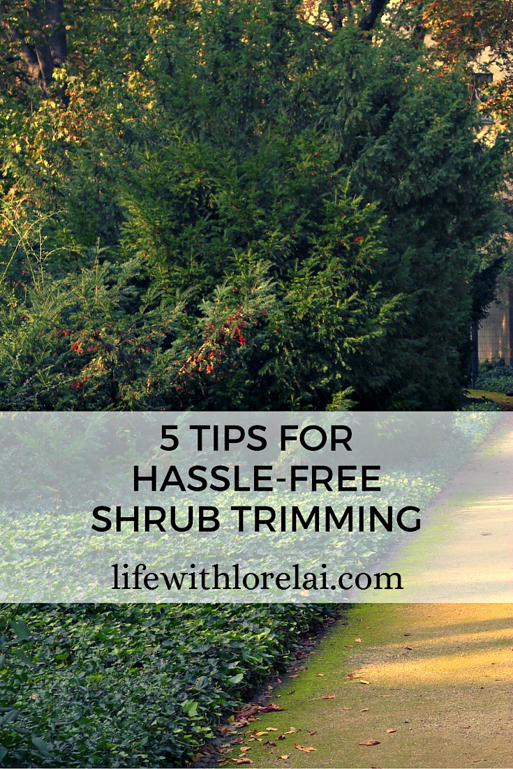 Great tips on how to take back control of your yard, and keep your plants healthy and beautiful with these how-tos for trimming your shrubs.