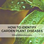 Plant Diseases – How To Identify Them In Your Garden