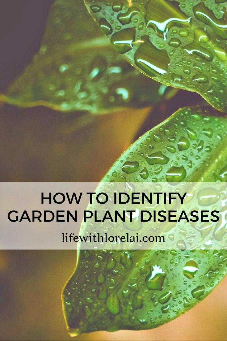 Keep your garden healthy and strong. Learn how to identify and care for common plant diseases. Plus get prevention and disposal tips.