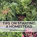 Homestead – Get Tips To Start Homesteading