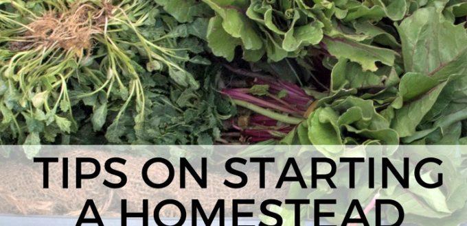 Homestead – Get Tips To Start Homesteading