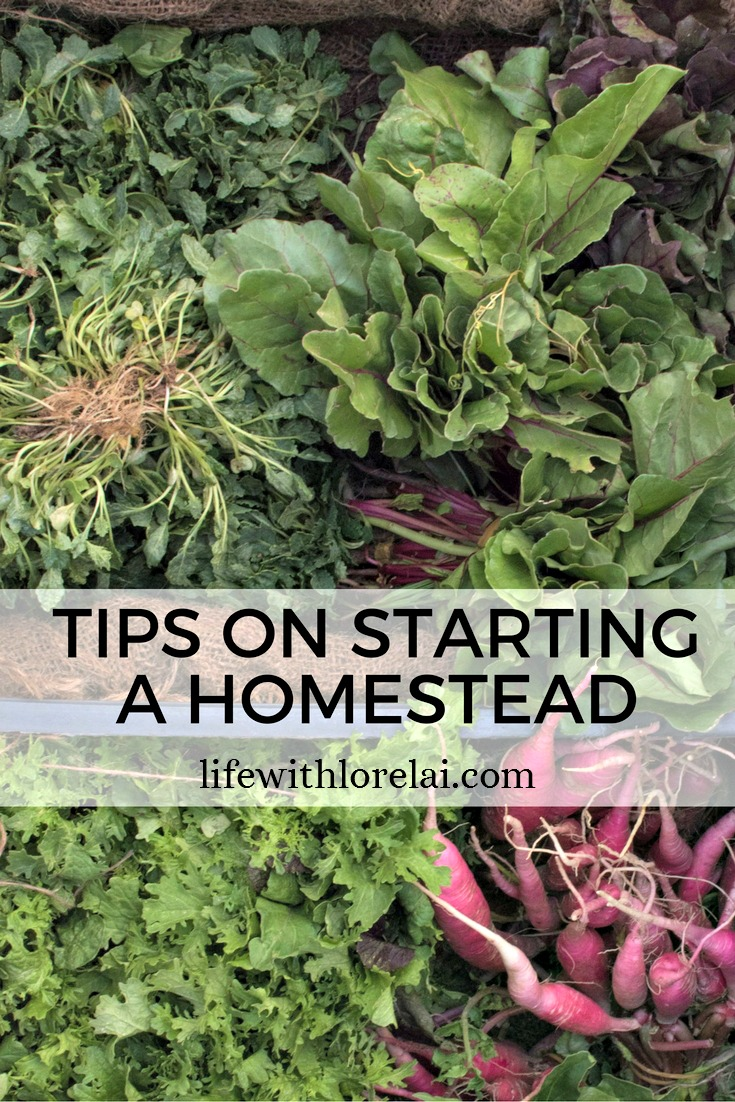 Tips On Starting A Homestead - Homesteading is a lifestyle that takes time and practice. Get tips, tricks, and ideas to get you started. #homesteading #Tips