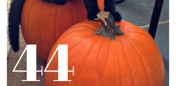 Autumn memories are filled with all things pumpkin from trips to the pumpkin patch to tasty recipes, carving and crafting, and more. Get 44 ideas here!
