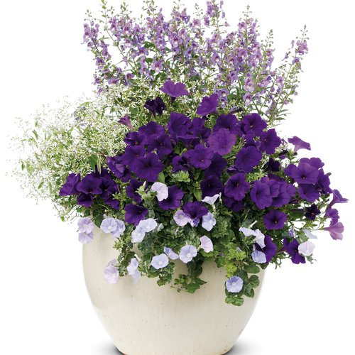 Mother S Day Container Garden Ideas: 10 Beautiful Container Garden Ideas
