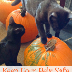 Keep Pets Safe At Halloween – Dogs And Cats