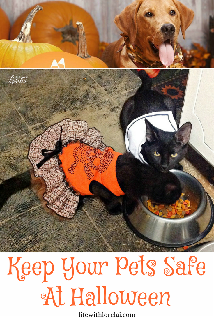 We love our pets -- they're one of the family. Keep your pets safe this Halloween by checking out this infographic and be aware.