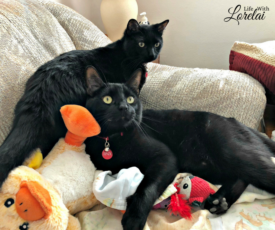 Save kitty cats while buying litter for your own cat. One pound of litter is donated for every green jug of Fresh & Light® litter purchased in Cat's Pride® Litter for Good™ program. Help your local animal shelter. #ad #LitterForGood